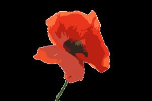 poppy-flower-1131868_960_720