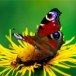 Butterfly garden Lyonsdown